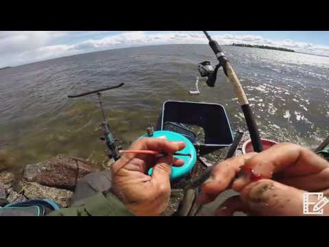 финский залив 2017 ловля судака