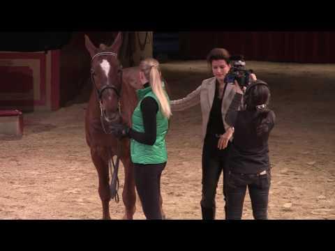 Bild: Pferdegesundheit - Rücken- Probleme und Schmerzen beim Pferd erkennen - so geht´s