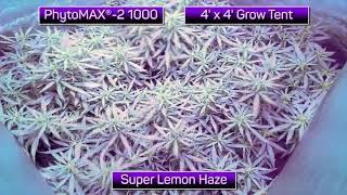 PhytoMAX -2 1000 LED Timelapse