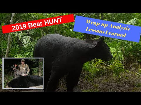 Lessons Learned From The 2019 Minnesota Bear Hunt