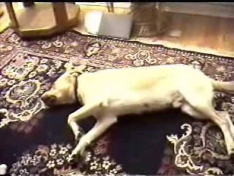 Smart Dog - Bruno Plays Dead