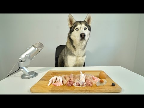 asmr-husky-reviewing-raw-chicken-meat-parts!