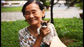 Bà già 'đệ nhị' nuôi cả trăm con mèo hoag khiến nhiều người cảm phục
