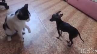 Смешное видео про собак 2015 Приколы с собаками