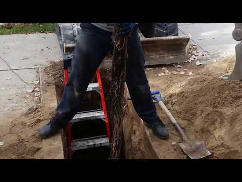 Drain Services | Stallion Plumbing and Drains Salt lake city