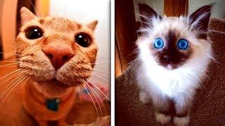 30 котиков, в существование которых сложно поверить. Смешные кошки 2019. Приколы с котами до слез