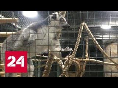 Вопрос: Контактные зоопарки продолжают работать, почему?