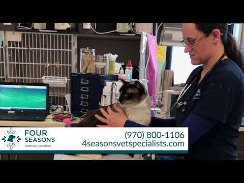 four-seasons-veterinary-specialists-|-veterinary-services-in-loveland