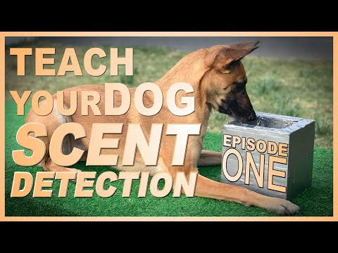 How to Teach Your Dog Scent Detection. Episode 1