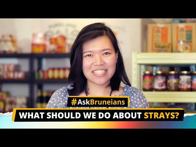 Ask Bruneians: What should we do about strays?