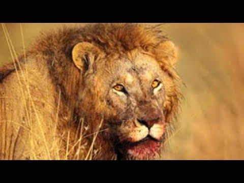 Download Man Eaters - Legendary Tsavo Lions Documentary