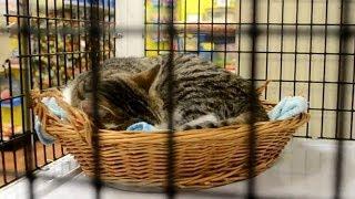 США - Супермаркет для ДОМАШНИХ ЖИВОТНЫХ - попугаи, которые не улетают... взрослые котики на продажу)
