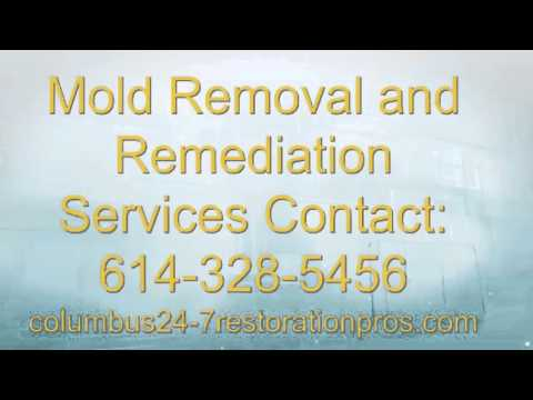 Columbus OH Mold Removal and Mold Remediation Restoration