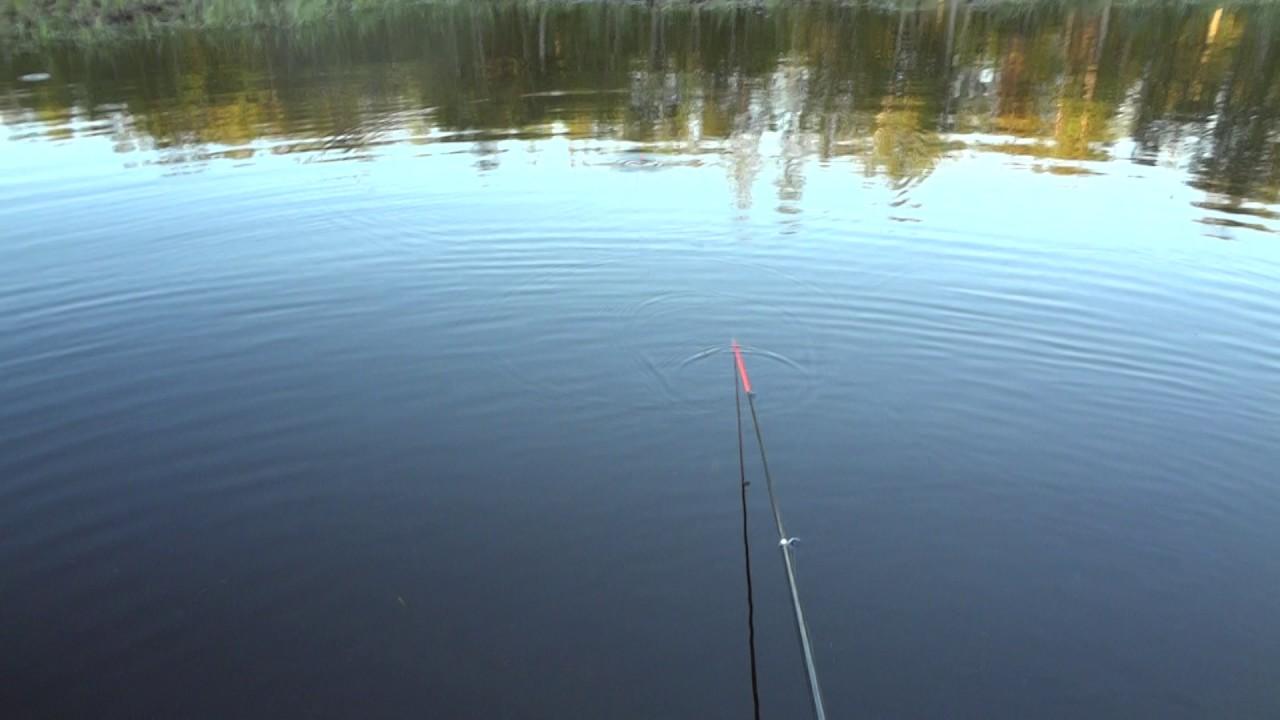 рыбалка на ильмене сегодня форум