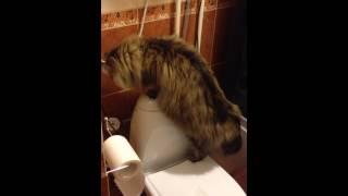 кот Шашлык падает с унитаза