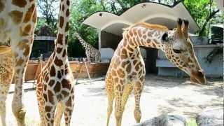 Beaconhouse @ Zoo Negara