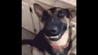 笑える!愉快でおもしろい動物たち! 犬、猫、熊、ペンギンなどの楽しい...