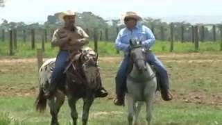 Perfil Agropecuario Domingo 04 Junio - Día de Campo en Ospino