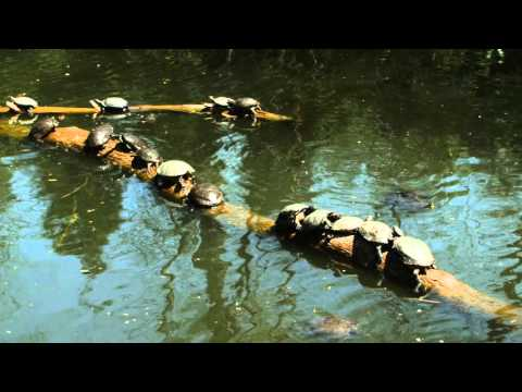 Binaural NY: Prospect Park Zoo - Brooklyn 3D Audio