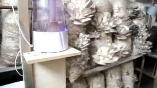 помещение для выгонки грибов Вешенка, идеи для бизнеса(Если Вам понравилось видео, можно поставить Лайк, Грибочки от этого лучше растут.! Для выращивания вешенки..., 2013-07-12T12:14:45.000Z)