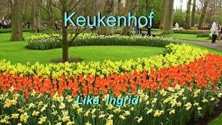 Keukenhof. Netherlands