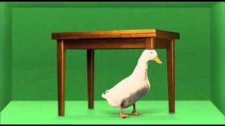 """Liberad al Pato Willix """"El primer pato pata"""""""