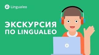 Новичкам: знакомство с Lingualeo