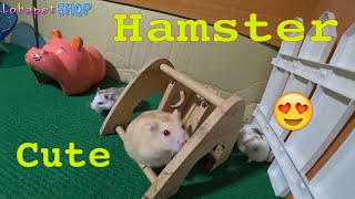 Cute and fun hamster at LoHa Pet Shop