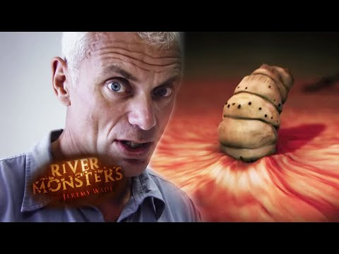 The Invisible Killers | River Monsters