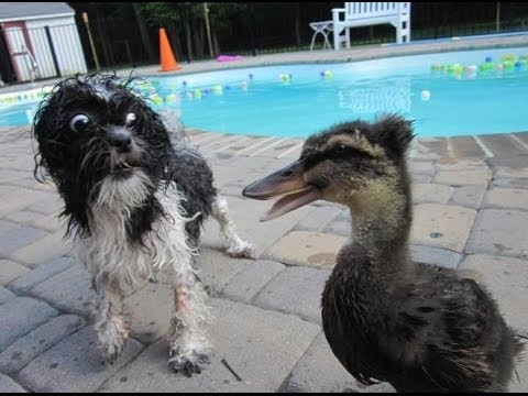 Image result for Images bird scaring the dog