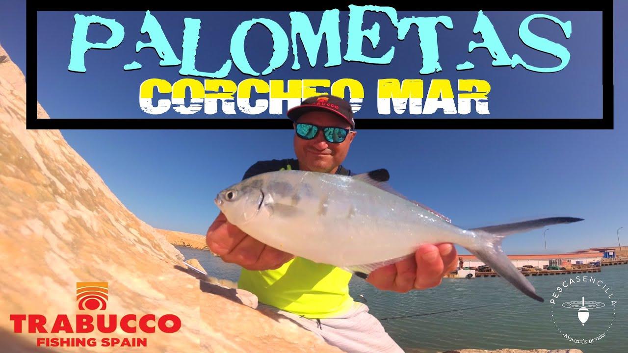Corcheo Mar : Jornada pesca a la Boloñesa PALOMETAS.