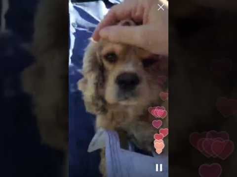 boo at the south los angeles animal shelter 10 25 16 youtube