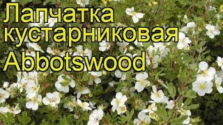 видео Potentilla fruticosa Abbotswood