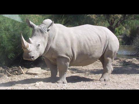 ولادة وحيد قرن أبيض وثلاثة نمور بيضاء بحديقة حيوانات فرنسية  - نشر قبل 7 ساعة