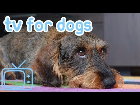 TV for Dogs! Calm Your Dog with TV & Relaxing Music! NEW 2018!