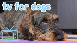 Videos for Dogs! Calm Your Dog with TV & Relaxing Music! NEW 2018!