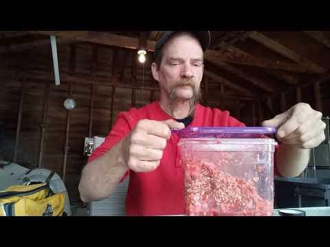 Preparing Shrimp For Catfishing
