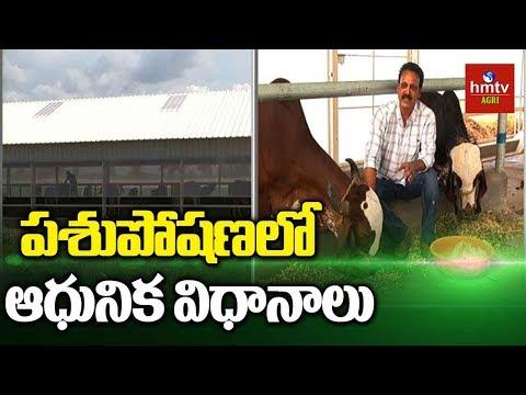 పశుపోషణలో ఆధునిక విధానాలు | Organic Cattle Farming | Natural Farming | hmtv Agri