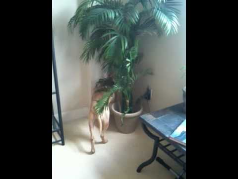 Dog trancing in tree