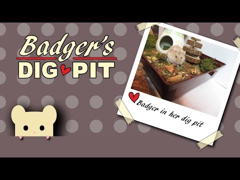 badger's-forage-tray-|-hamster-exploring-🐾