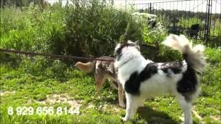 Васса - бывшая домашняя собака в добрые руки