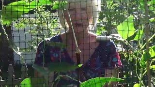 How To Grow & Harvest Lemongrass, Ginger, Thai White Seeded Long Green Beans,