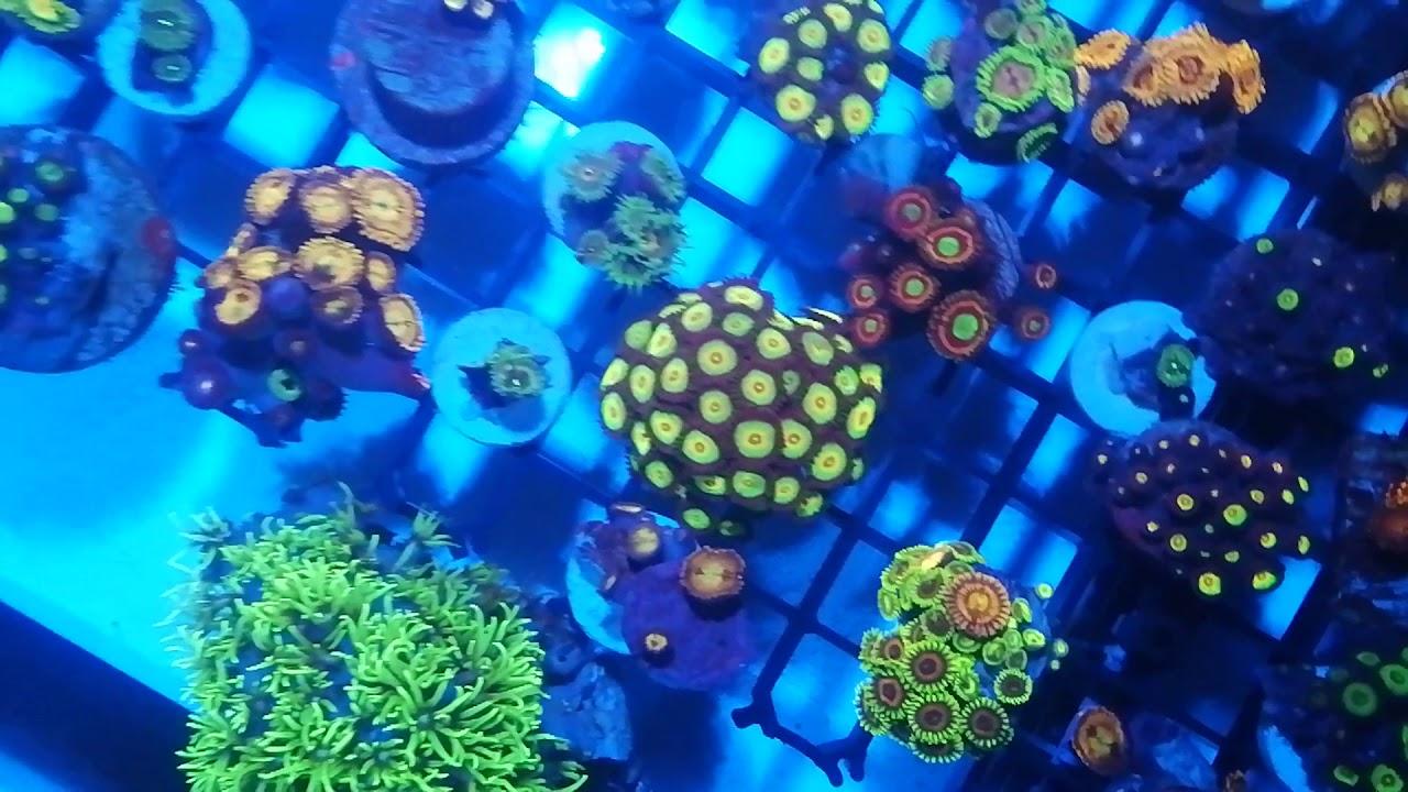 Fauna Marin The Dip korallfürdető ml - Korallszirt Webáruház