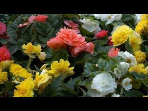 Top 5 summer flowering plants