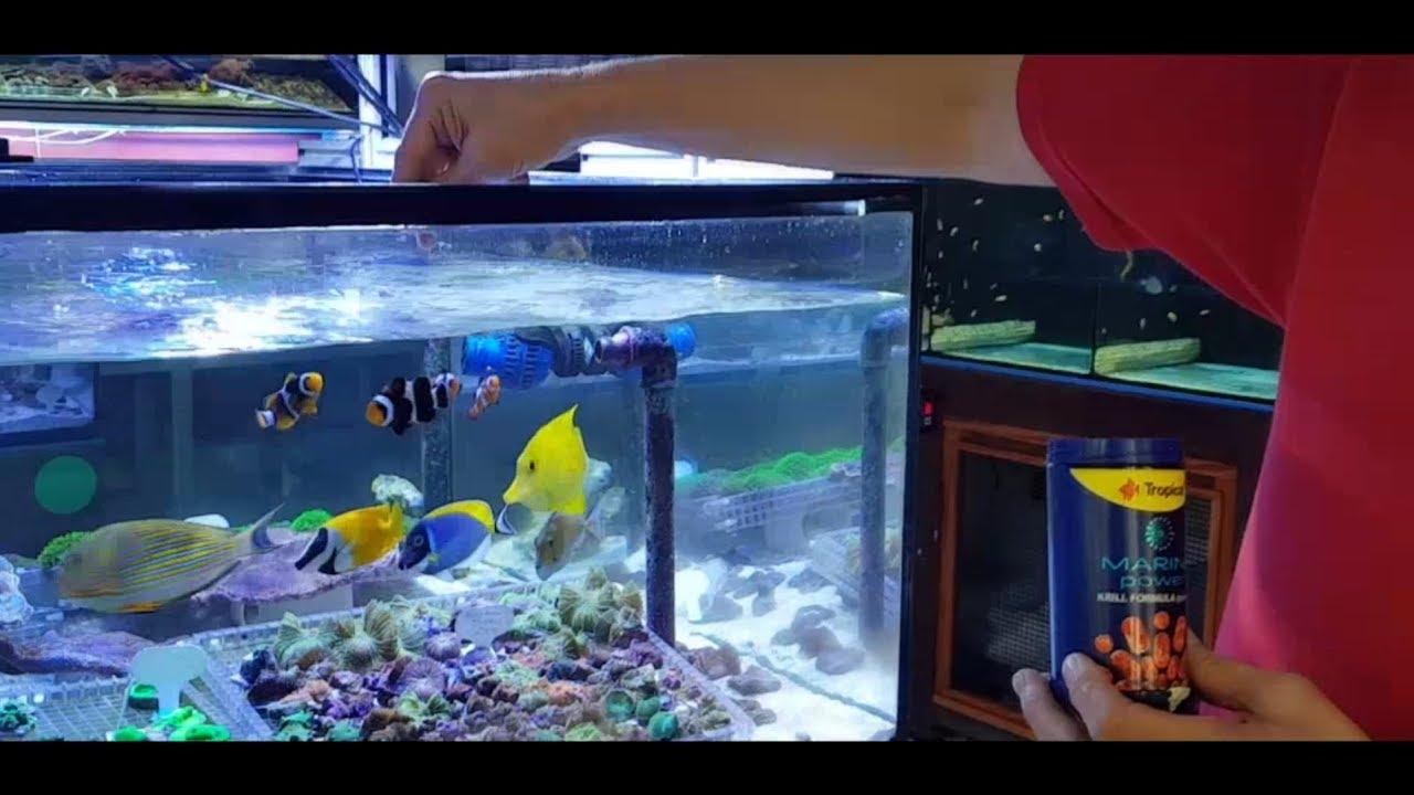 Loja de aquarismo Mundo Aquático em São Paulo