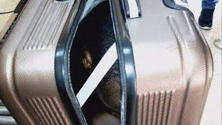 شاهد.. فتاة مغربية تحاول تهريب مهاجر داخل حقيبة سفر