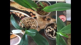 Как ухаживать за орхидеями Ответы на многие вопросы по уходу Обработка орхидей Живой