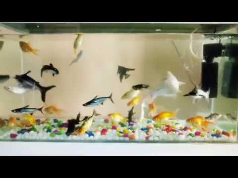 My Community Fish Tank