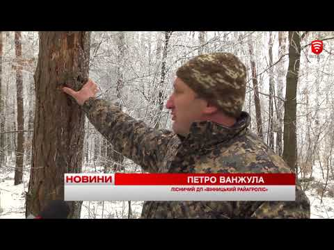 VITAtvVINN .Телеканал ВІТА новини: Дерева хворіють, новини 2018-01-23