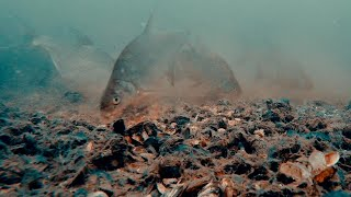 видео Прикармливание на глубине